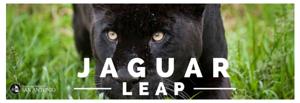 Jaguar Leap Newsletters