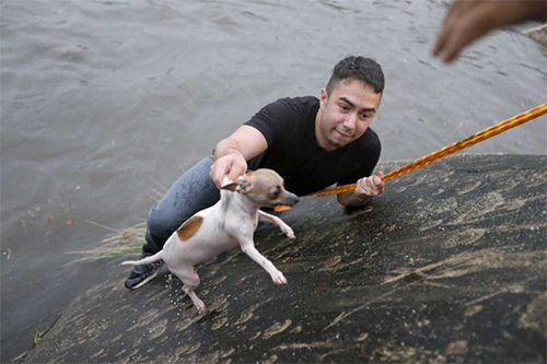 Heroic alumnus rescues dog while reporting for San Antonio Express-News